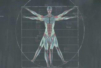 Anatomie dessinée par Zhong Quanbin