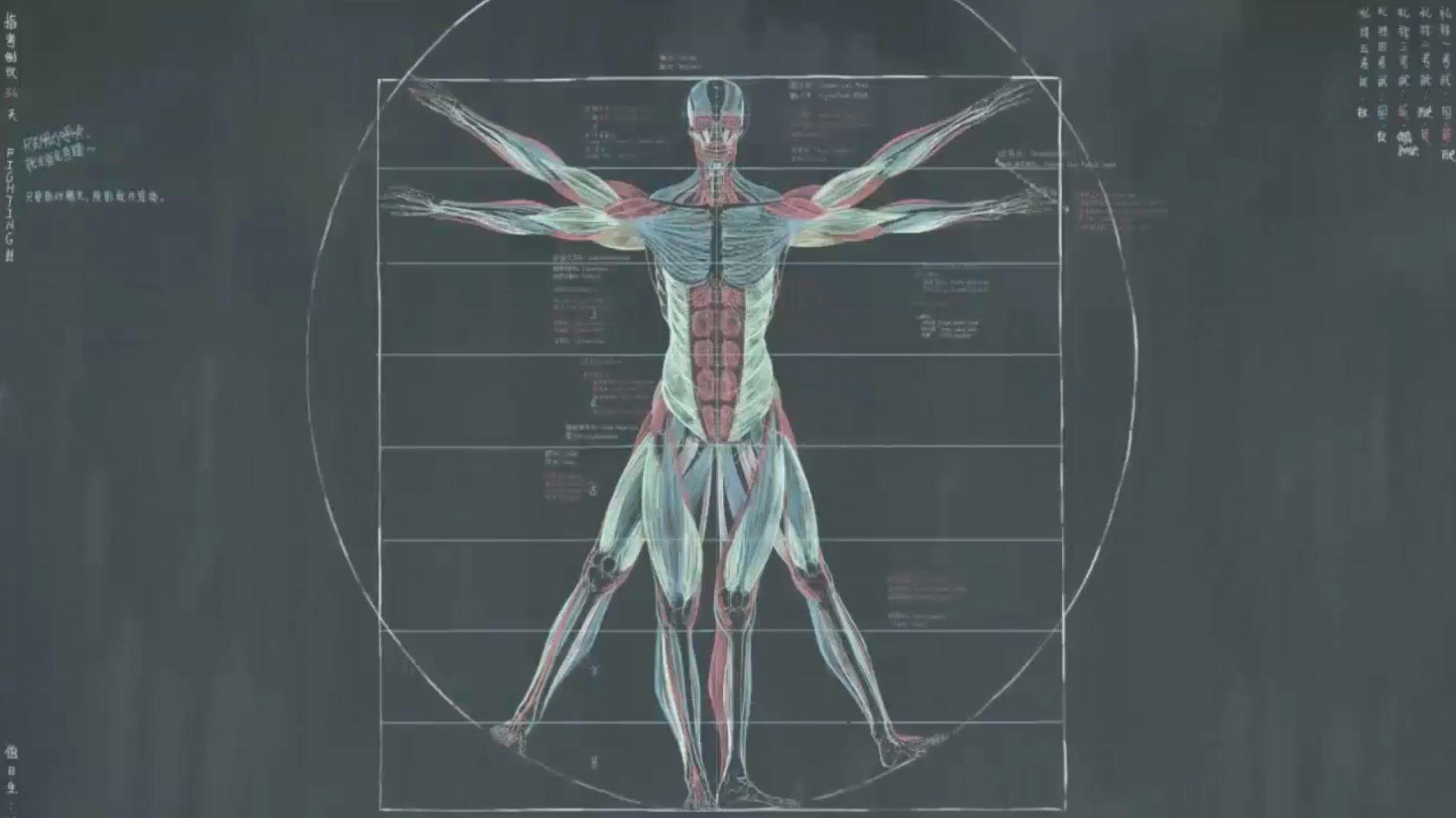 Anatomie dessinée