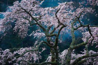 Fascination, photographie de de Katsuyoshi Nakahara, Japon
