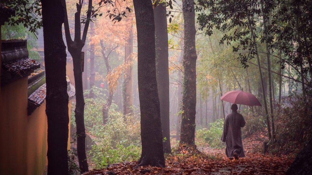 Marche en sous bois