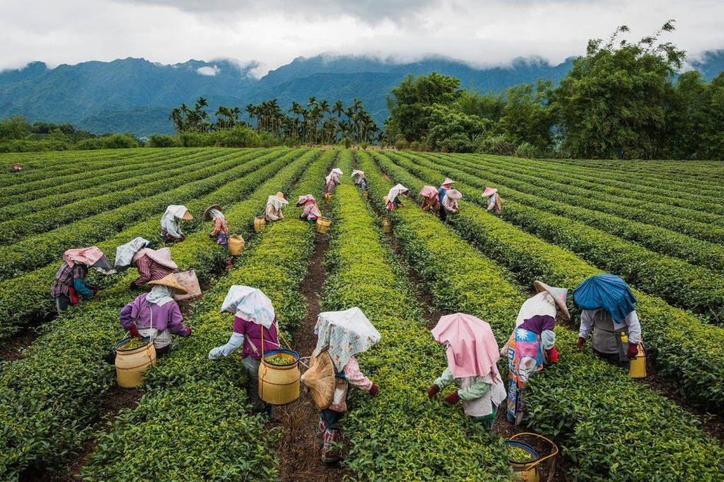 L'heure du thé à Taïwan