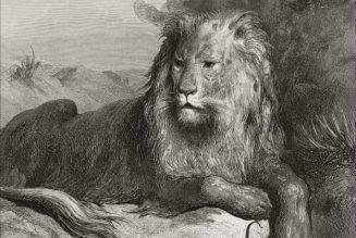 Le lion et le rat, dessin de Gustave Doré, gravure sur bois de Louis Dumont.