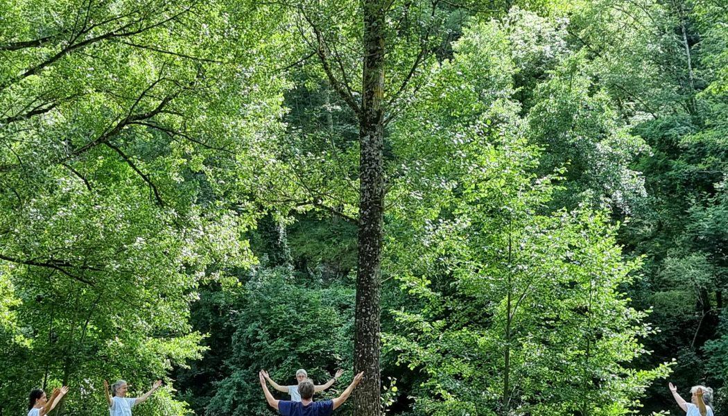 Pratique sous les arbres, séminaire d'été 2021
